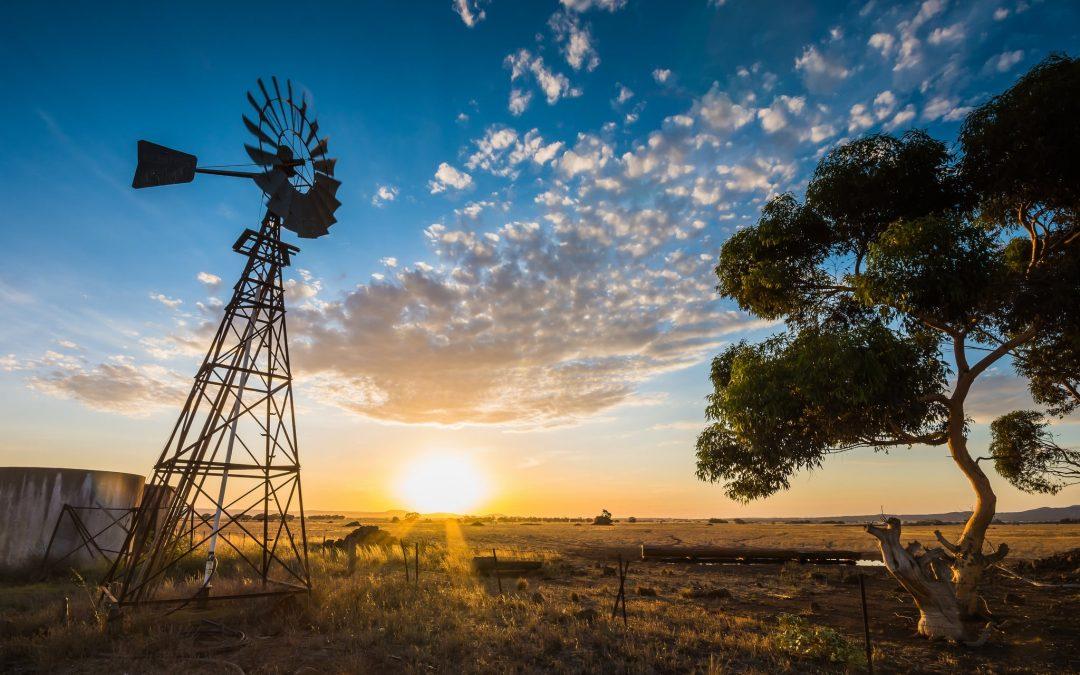 Finalised 2019-20 Brown Marmorated Stink Bug Seasonal Measures